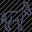 burro, donkey, goat, neddy icon