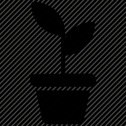 ecology, flower pot, plant, plant pot, sapling icon