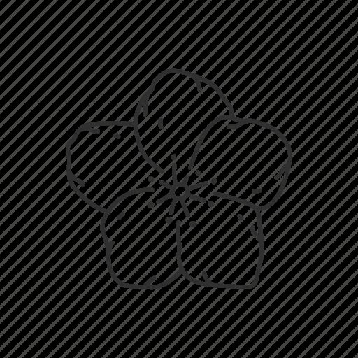 flower, iowa, state, state flower, state symbol, usa, wild prairie rose icon