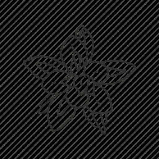 Flower, indian paintbrush, state, state flower, state symbol, usa, wyoming icon