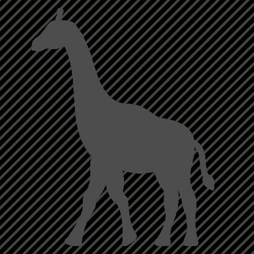 African Safari Icon