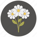bouquet, flower, flowers, romantic, valentine icon