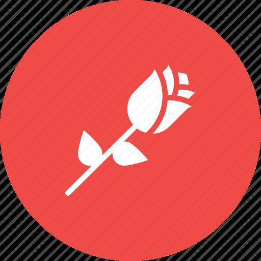 Day, flower, love, nature, propose, rose, valentine icon - Download on Iconfinder