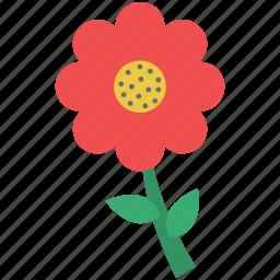 daisy, flower, lovely flower, nature, spring flower icon