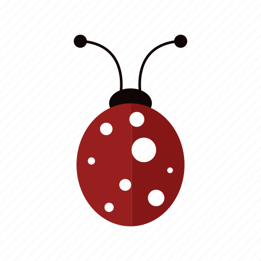 animal, deisgn, insect, ladybug, nature, red icon