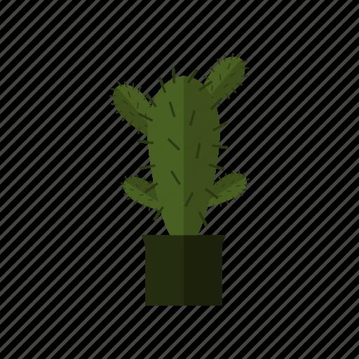 cactus, design, green, nature, plant icon