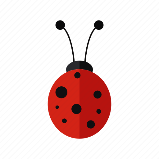animal, design, insect, ladybug, nature, red icon