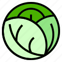 cabbage, leaf, lettuce icon