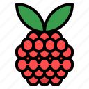 berry, rasberries icon