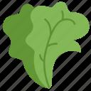 fruit, green, lettuce, salad, vegetables