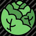cabbage, vegetable, organic food, healthy, vegetarian, vegan, nutrition