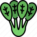 spinach, vegetable, organic food, healthy, vegetarian, vegan, nutrition
