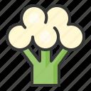 cauliflower, food, healthy, vegan, vegetable