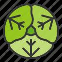 cabbage, food, healthy, vegan, vegetable