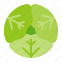 cabbage, food, healthy, vegan, vegetable icon
