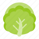 cabbage, chinese cabbage, food, healthy, vegan, vegetable icon