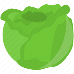 cooking, food, green, lettuce icon