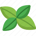 basilic, basilica, food, healthy, organic, vegetable, vegetables icon
