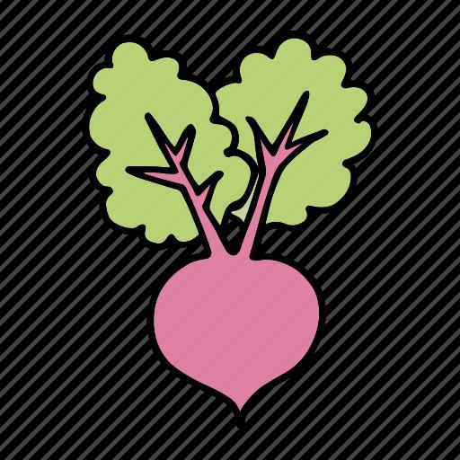 beet, beetroot, cook, food, ingredient, vegetable, veggie icon