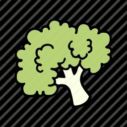 broccoli, cook, food, greens, ingredient, vegetable, veggie icon