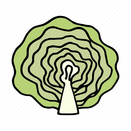 cabbage, cook, food, ingredient, lettuce, vegetable, veggie icon