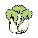 cabbage, chinesecabbage, cook, food, ingredient, vegetable, veggie icon