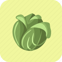 cabbage, food, head, lettuce, vegetable icon