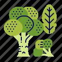 broccoli, food, greens, raw food, vegetables, veggie icon