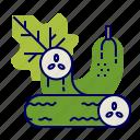 cucumber, food, greens, raw food, vegetables, veggie icon