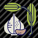 food, garlic, greens, raw food, vegetables, veggie icon