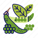 food, greens, peas, raw food, vegetables, veggie icon
