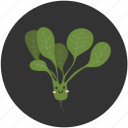 cartoon, food, healthy, ingredient, salad, spinach, vegetable icon