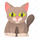 aid, cartoon, cat, clinic, medicine, pet, vet icon