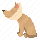 animal, bandage, breed, canine, care, cartoon, sick dog icon