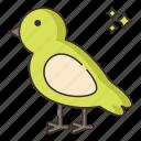 animal, bird, pet