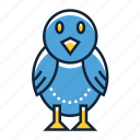 bird, animal, owl, pet