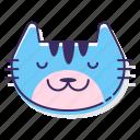 animal, cat, cute, pet