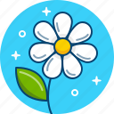 bloom, camomile, daisy, flower, nature, petal icon