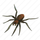 arachnid, creepy, halloween, horror, insect, scary, spider, spooky icon