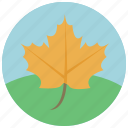 autumn, forecast, leaf, season, weather icon