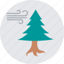 conifer windbreak, fir tree, forest wind, tree wind, winter icon