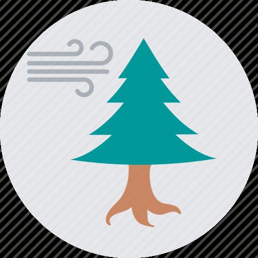 conifer windbreak, fir tree, forest wind, tree wind, winter icon