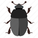 animal, bug, bugs, insect icon
