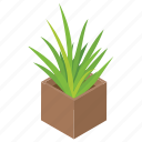potted plant, natural plant, plant growing, garden plant, garden care