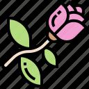 blossom, flora, flower, love, rose