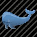 animal, cachalot, cetacea, large, sperm, whale