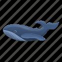 humpback, life, marine, ocean, sea, whale