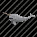 marine, animal, mammal, tusking, horn, narwhals
