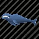 blue, humpback, marine, narwhal, ocean, whale