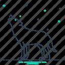 canine, carnivorous, fox, howl, jackal, wilderness, wolf